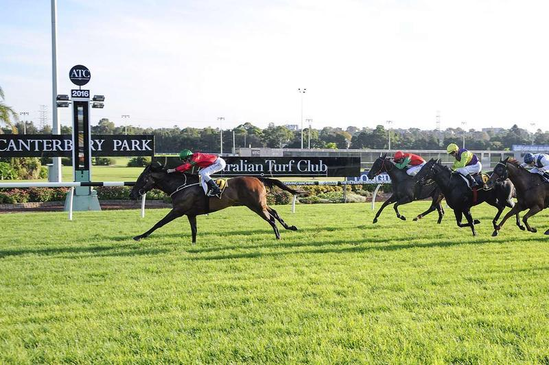 Daysee Doom wins again at Canterbury
