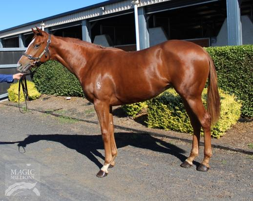 Foxwedge Filly