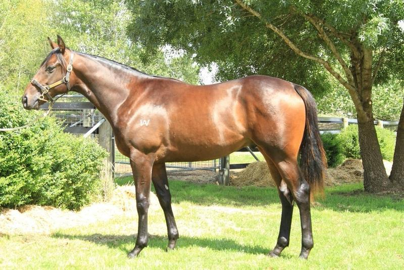 Shares Available In This Stunning Colt