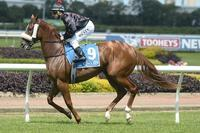 Free Lease - No Upfront Costs!! Race a 2yo Filly in July!