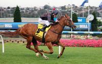 Moonee Valley Win For Russian Ruby