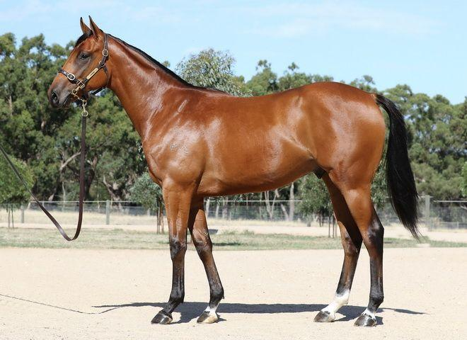888 Racing Purchase Exciting Colt