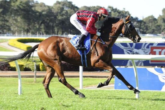 Vergara Stays Home, Attempts Randwick Mile