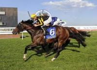 Hierarchal Steps up to Champion Stakes