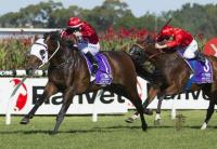 Montaigne (NZ) looks at second Group 1 in The BMW