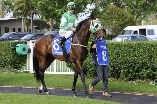 The Road To Victory Occured At Hawkesbury