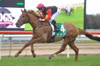 Houdini Hal continues stables fine run