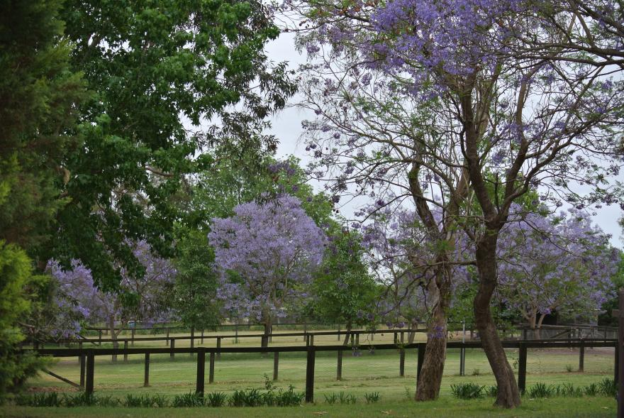 Princes Farm's vital role in stable's success