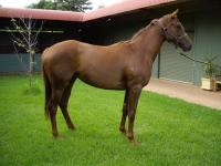 Shares Available in 3yo filly by Marwina