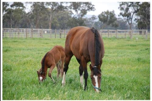 Our Leading Lady Lacey Produces a Filly!