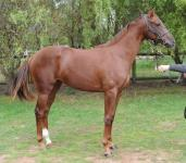 Shares Available in yearling Sebring Filly