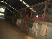 Inside the Barn.jpg