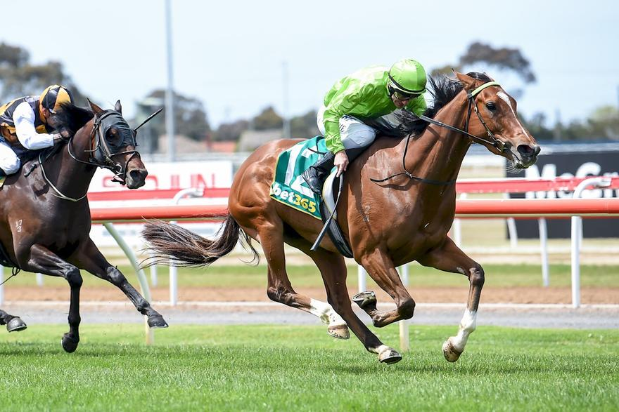Truly Earns A Start In Melbourne Cup Country Final