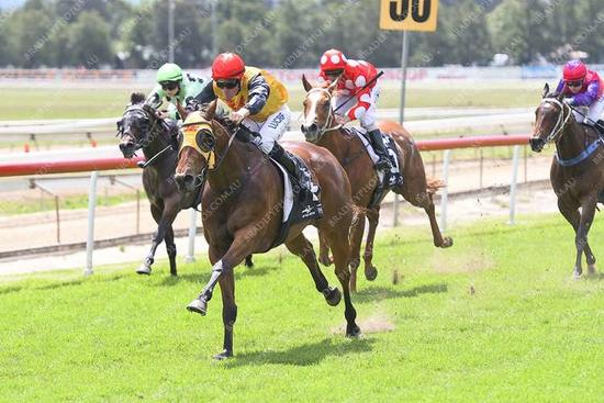 Hawkesbury trainer Mitch Newman showing promising form
