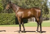 Second Win for Private Steer's Boy