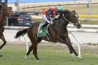 Andrassy set for stakes test