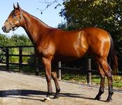 ALL TOO HARD COLT FULLY SYNDICATED IN A DAY!