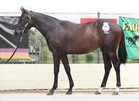 Bruce Hill Pair Off To Ballina