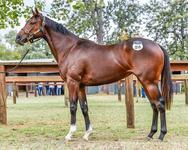 Chappette Ready To Debut