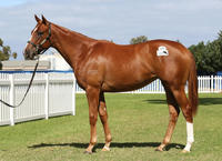 Grand Syndicates Two Year Olds Set For First Trials