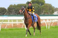 Grand Syndicates Mares Wrap Up Successful Preps