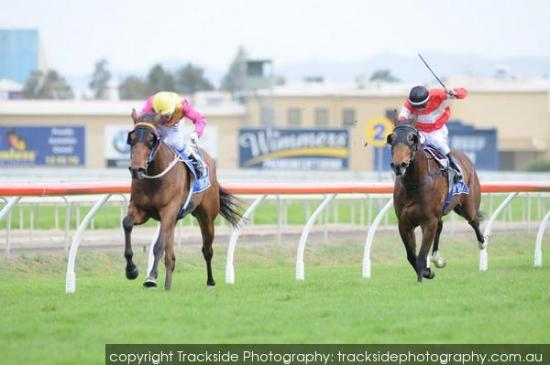Heart Stealer winning at the Gold Coast
