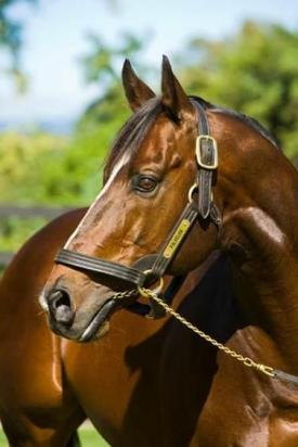 Two Honours at the Queensland Racing Industry Awards
