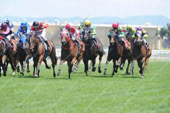 Magic Millions Race Day Round Up