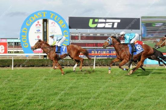 Dancing Warrior scores impressive win at the Gold Coast!