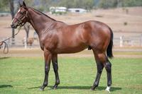 Yearling Shares For Sale - Outreach x Mini Colt