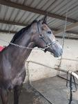 HOW MUCH DOES IT COST TO HAVE A RACEHORSE TRAINED BY DANNY BOUGOURE?