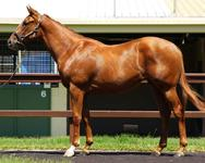Yearling Shares For Sale - Love Conquers All x Snitzel Express