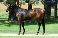 Yearling Shares For Sale - Tycoon Ruler x Never Despair Filly