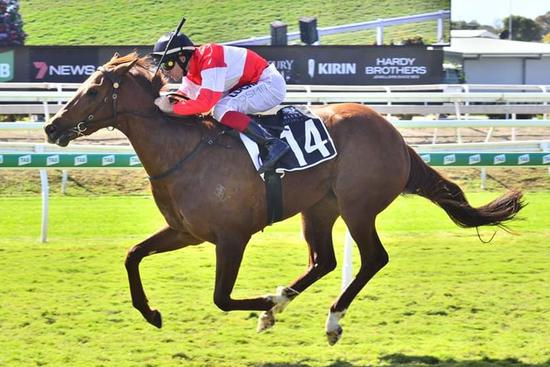 Promising filly Ginger Rock 2YO Saturday Metropolitan win