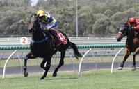 Melbourne Cup Day Win For Kalik