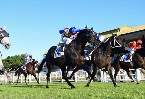 Brave Brando Becomes Our First Eagle Farm Winner