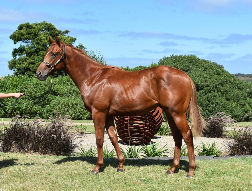 TESTA ROSSA Colt - Absolute value in this Colt