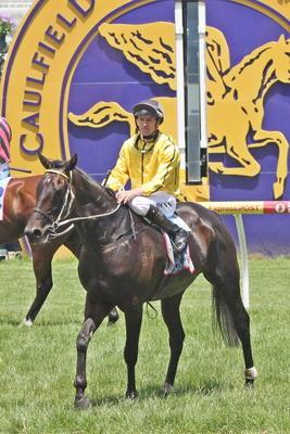Edwards Backs Small Galloper