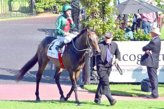 Sertorius close to Melbourne Cup start