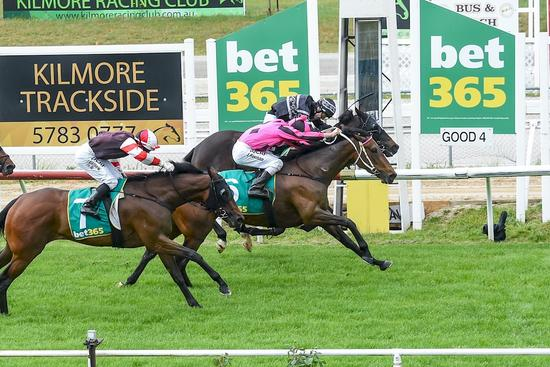 Staying mare nails last stride win at 2nd start