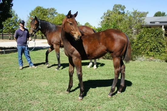 Squamosa Dawn Rising Filly