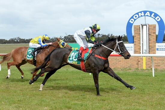 Promising stayer Evader lands betting plunge