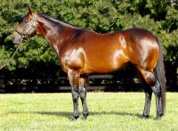 Vinery sire's move excites memory of Daybreak Lover