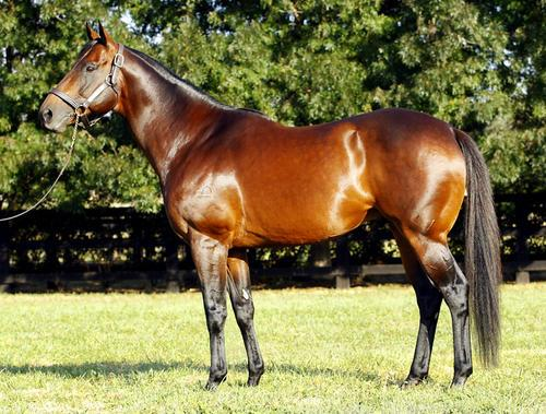 EXCITES - Vinery sire's move excites memory of Daybreak Lover