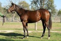 Hollylodge Sells Street Hero Filly