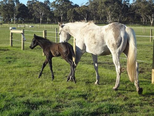 First 2012 Hollylodge foal for Zupaone