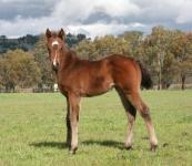 ZUPAONE x JUNGLE DANCE (Jungle Pocket) 2012 Filly