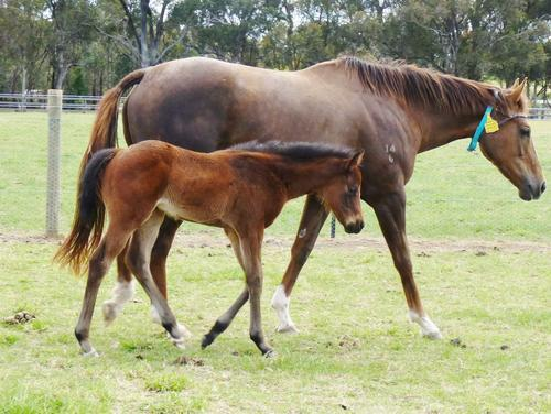 Bel Esprit filly for Flying Sheila