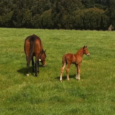 Another Zupaone foal