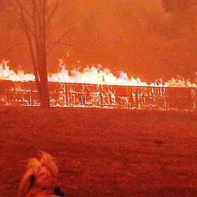 Donations Needed Now for Horses affected in Tassie Bushfires